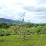 La floración del manzano y al fondo Sierra de Peñamayor