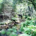 El Río Acebo
