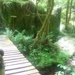 Puente de paso al Molín de Perea.