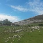 lagos-covadonga-10612583_798197953545589_561325324729250002_n